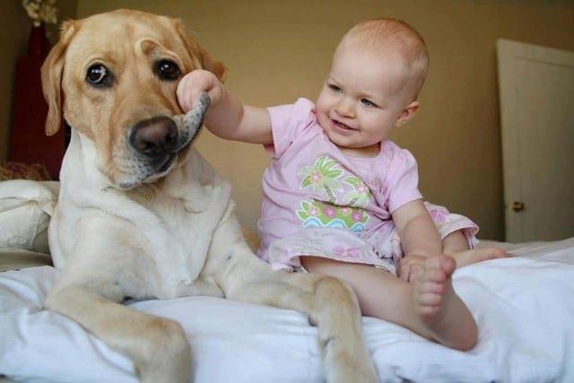 El perro mejor amigo del hombre