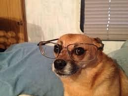 Uno de los perros mas inteligentes