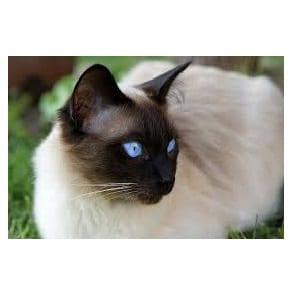 Los gatos mas hermosos