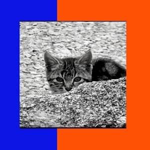 cuidados de los gatos romanos