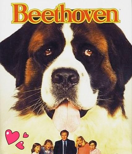beethoveb un perro artista famoso
