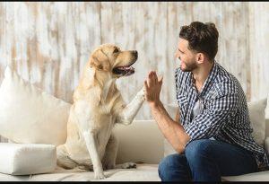 cuiadador de perro