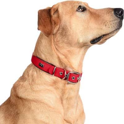 collares para perro 2020
